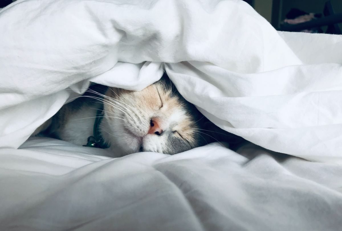 Cat naps are a normal part of feline behavior.