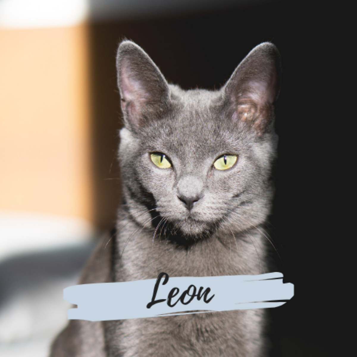Is he a Leon?