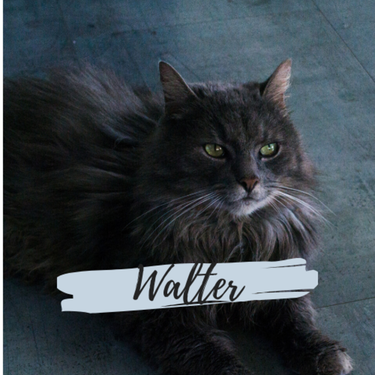 Is he a Walter?