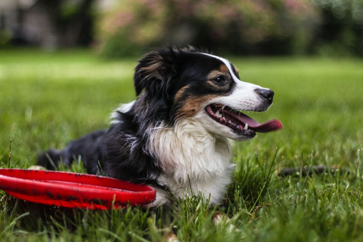 Dogs that are trained with reward-based methods demonstrate a high success rate.
