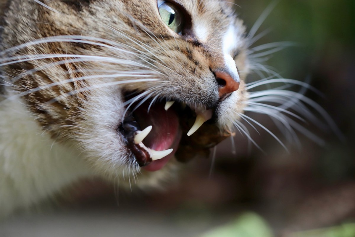 how-to-speak-to-your-cat