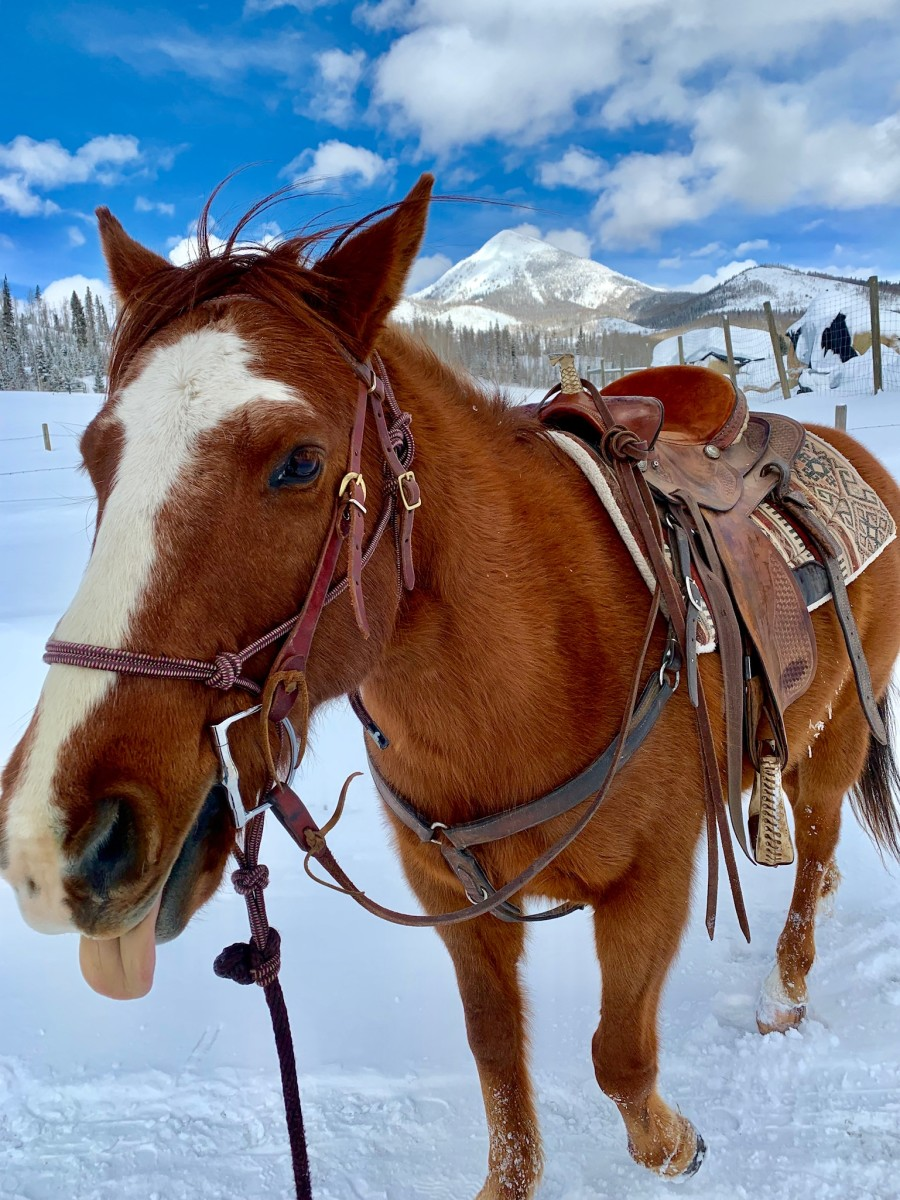 buying-a-horse-5-ways-to-find-the-right-horse-for-you