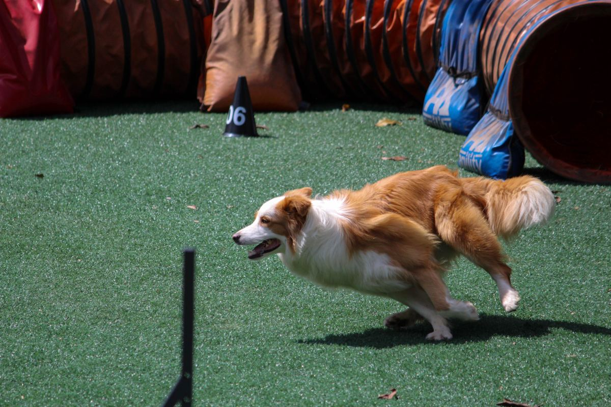 Some dog breeds have a high prey drive.