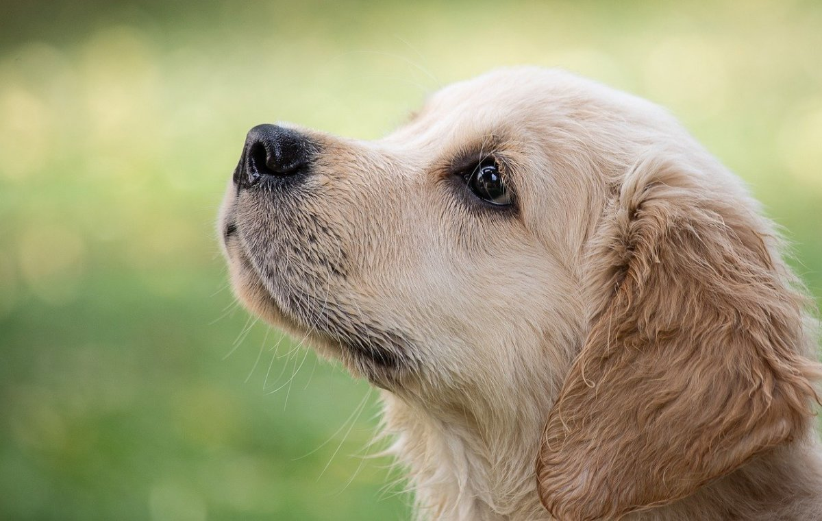 Train the dog to overcome separation anxiety