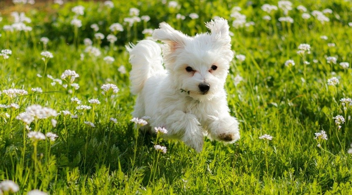 Confidence is key to a healthy dog, and this process needs to start when it is young