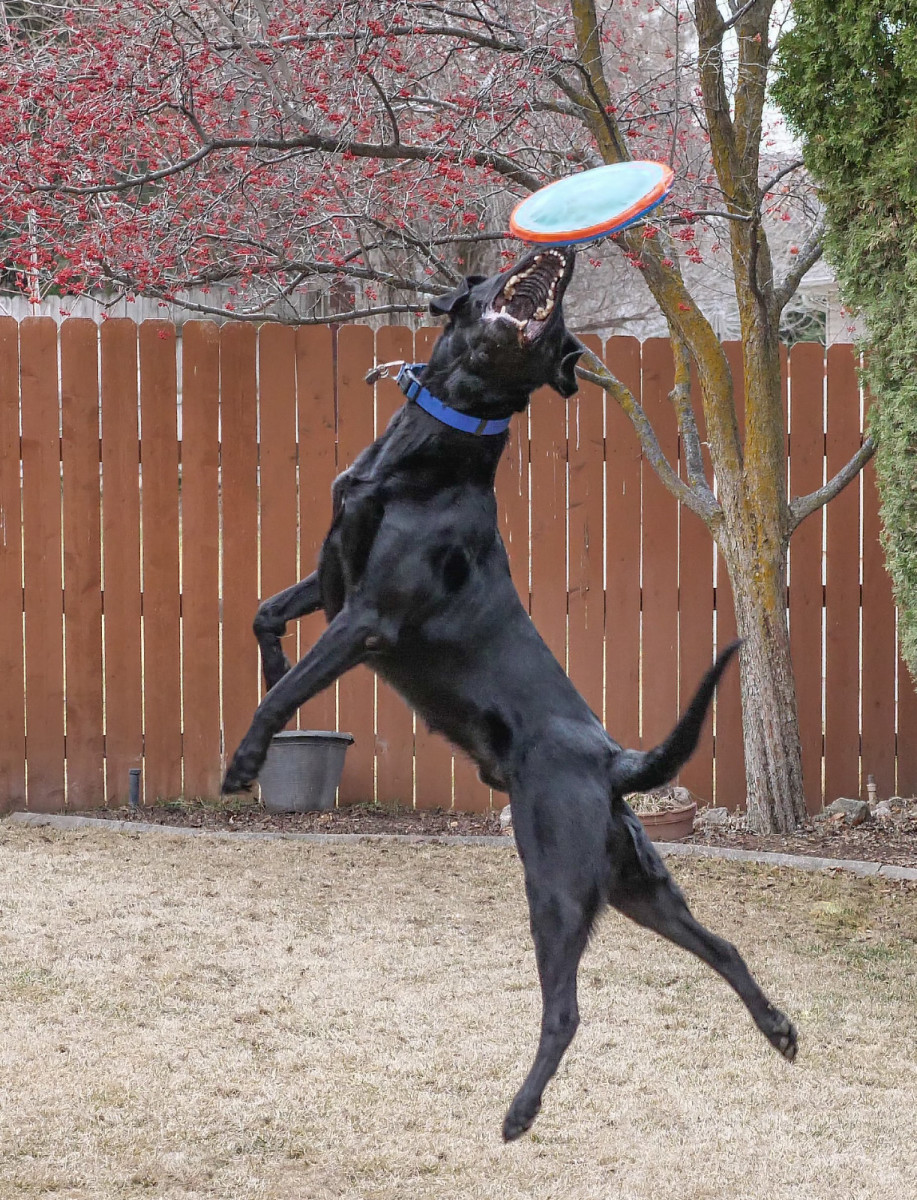 Jumping and twisting for a frisbee can result in serious injuries