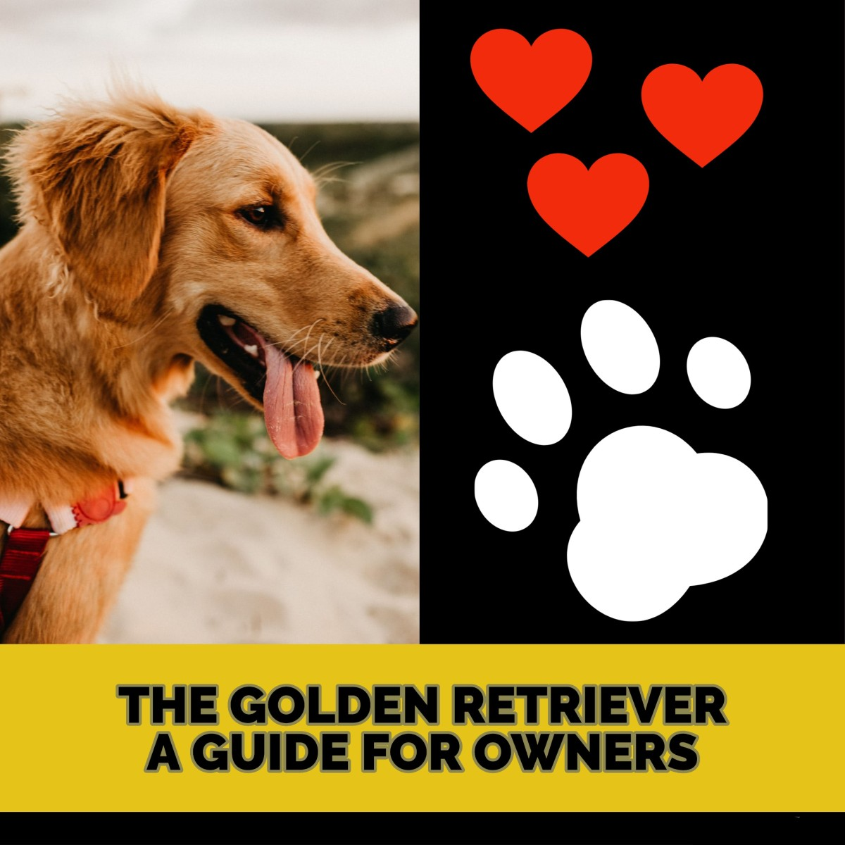 The Golden Retriever: A Guide for Owners