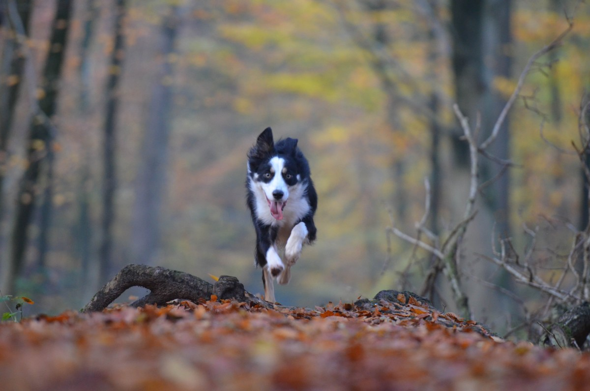 Dogs need their exercise, even during the holidays.