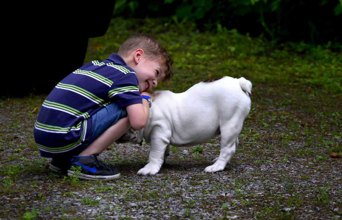Dogs that are unfamiliar with children can find them stressful