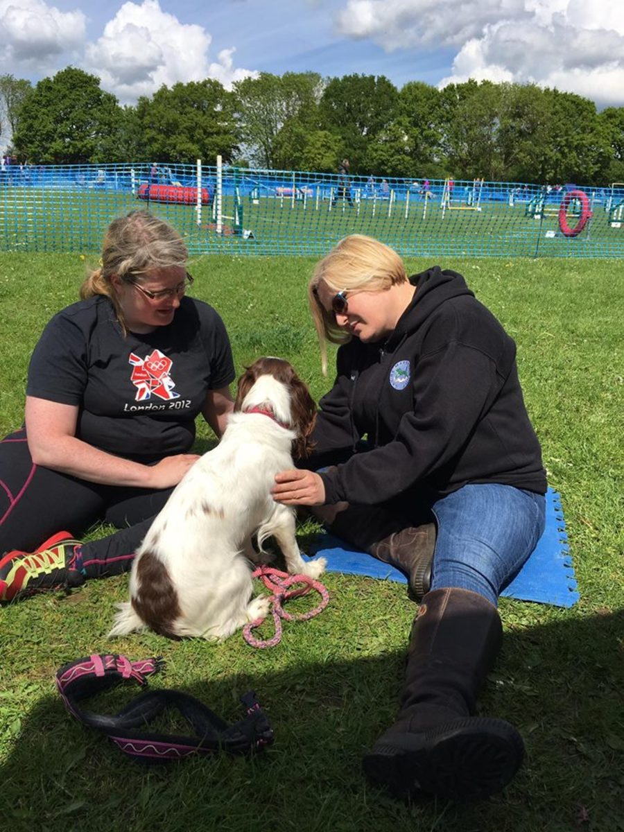 Adult dogs who adopt the puppy sit should be looked at by a vet, who will often refer them to an outside specialist, such as a physiotherapist.