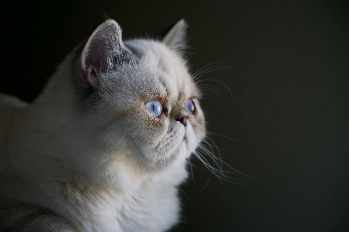 Domestic cats host a feline-specific coronavirus.