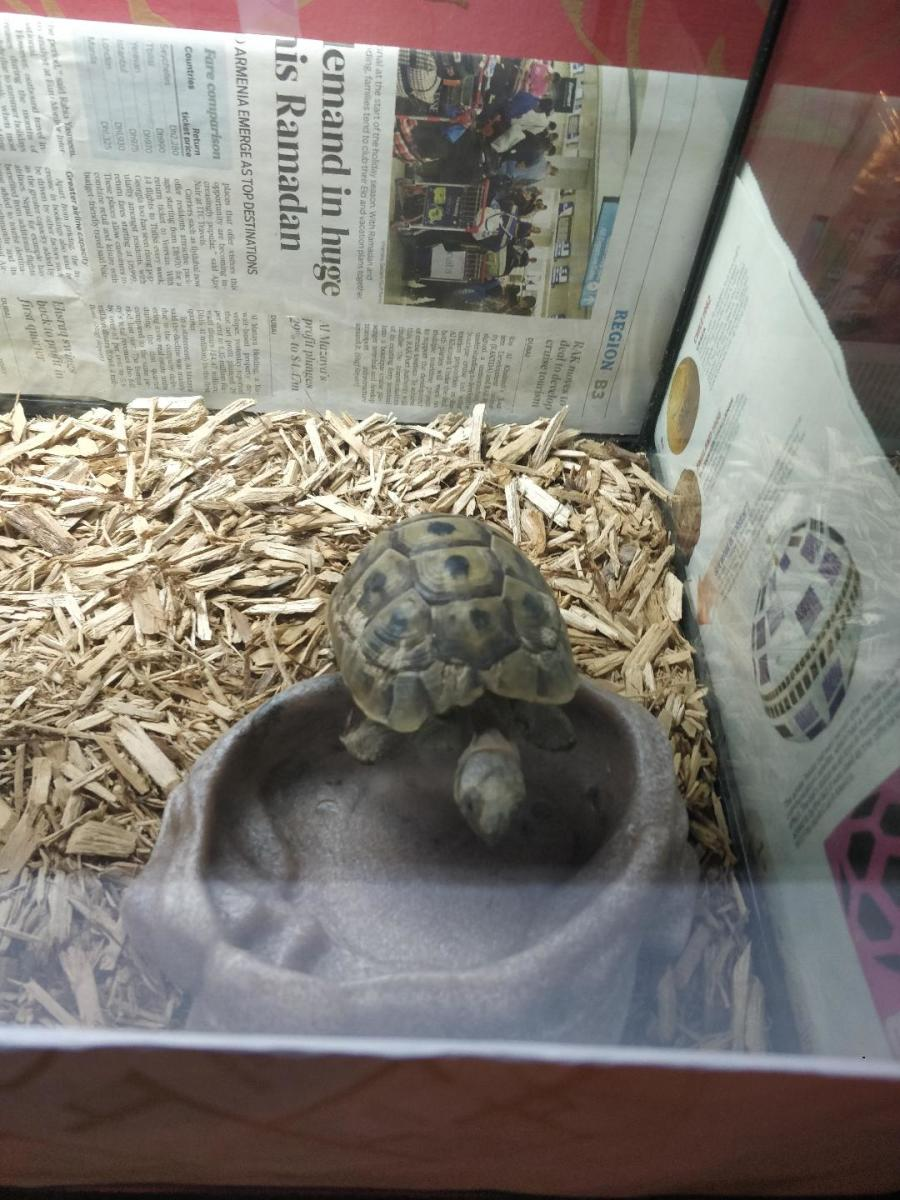 my tortoise in its enclosure made it forest flood bedding