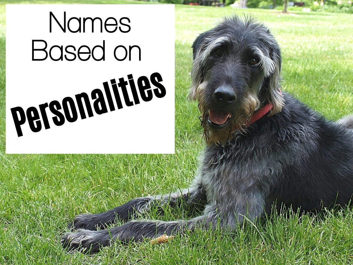 names-for-labradoodles