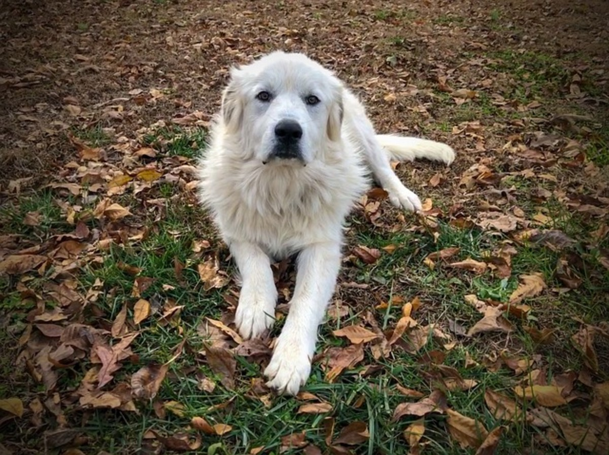 A Bored Pyr is a Potential Destructive Pry!