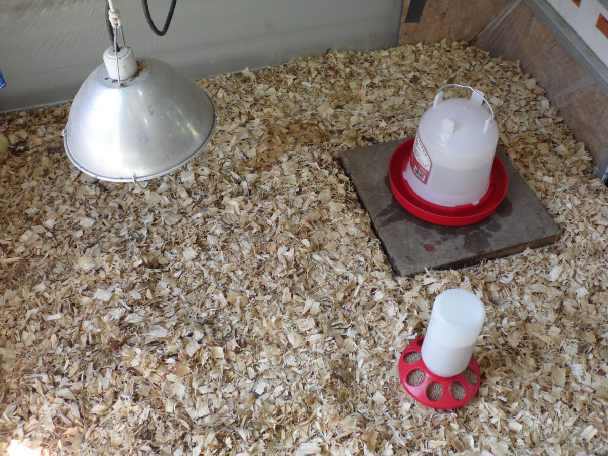 Brooder ready for baby ducks.