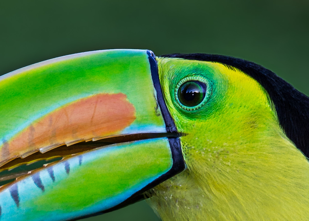 Toucans are also beautiful to see every day.