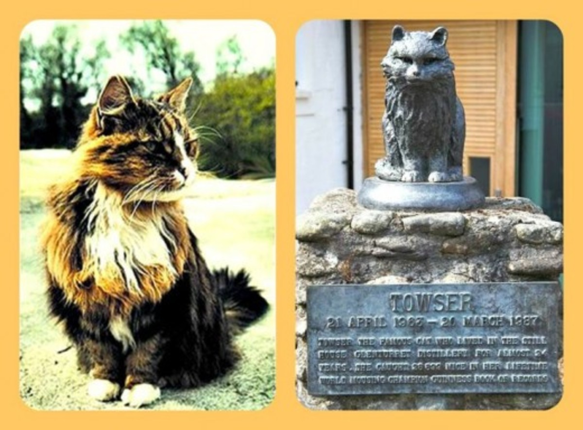 """Towser ""The Mouser"" (1963–1987) of Glenturret Distillery in Crieff, Scotland, holds the Guinness World Record for the most mice caught (28,899)"""