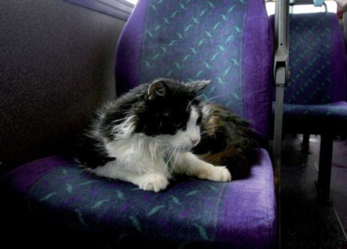 Casper the Bus Commuter