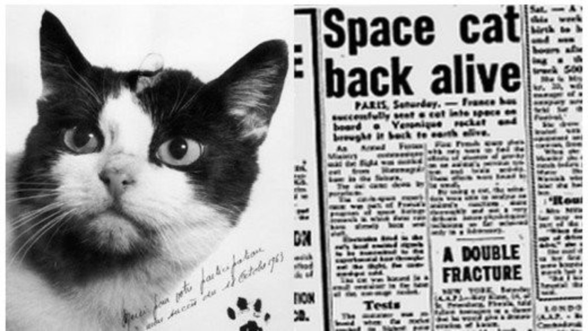 "Ooh La La - Felicette the ""Astrocat"""
