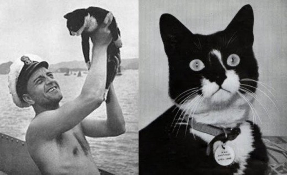 Unsinkable Sam, the cat who served on and survived 3 sinking ships during WWII.