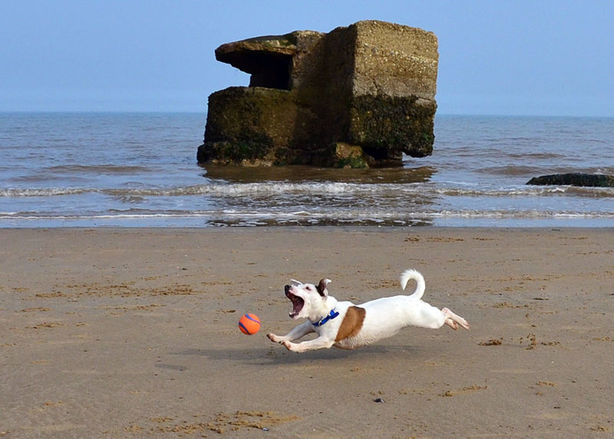 Caribbean beach names for dogs include Dover,  Grace and Maho.