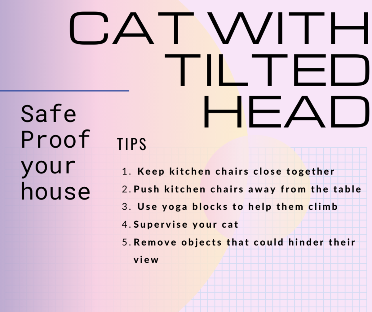 Steps you can take to protect a cat who has vestibular disease.