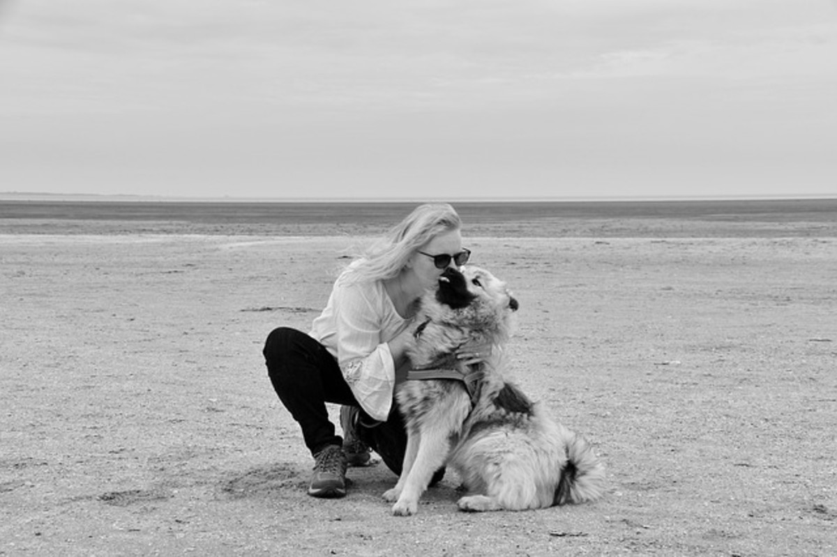 This dog doesn't seem too happy in being hugged and kissed. Notice the body pulled back,ears flat, tongue flick and there seem to be whale eyes.