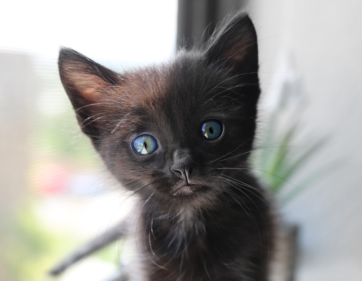 Does this baby kitten have superhero potential?