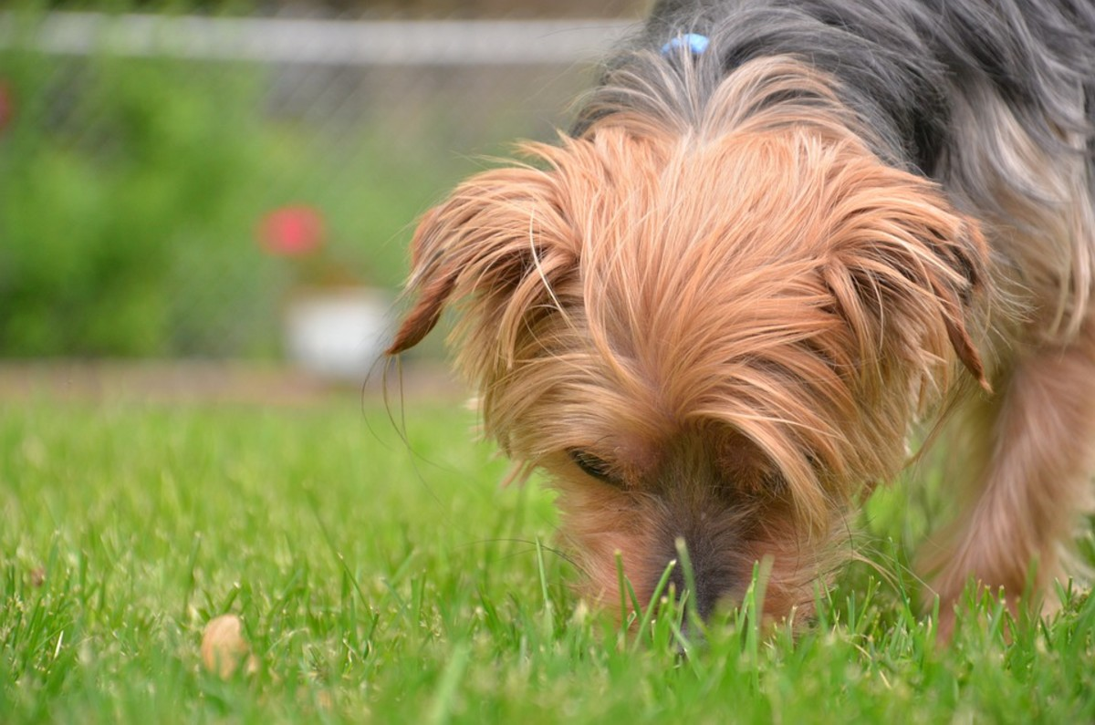 Throw treats into the grass and allow your dog to find them through his sense of smell!