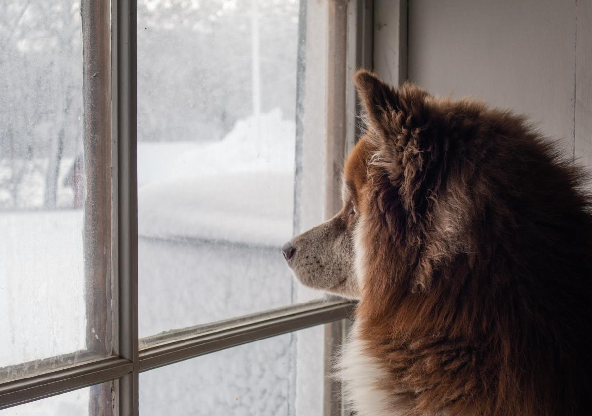 Your dog will enjoy seeing what's going on outside.