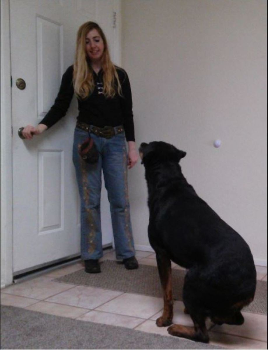 I ask my dog to sit when I touch the door knob