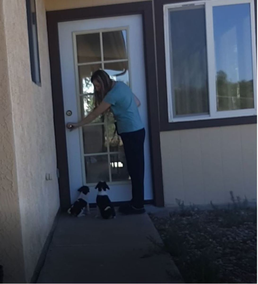 Here two 8-week old pups are learning to sit when I touch the door knob