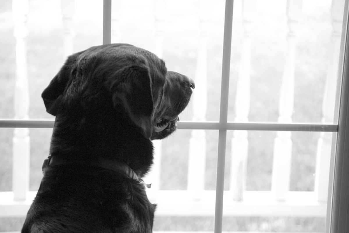 Have your dog look at triggers from the window and redirect to a smacking sound and treats.