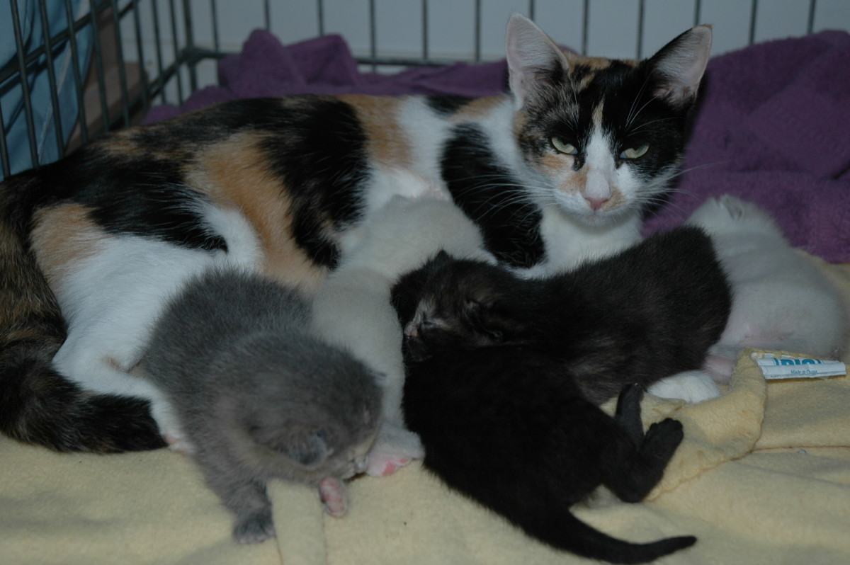 Claire and her five kittens!