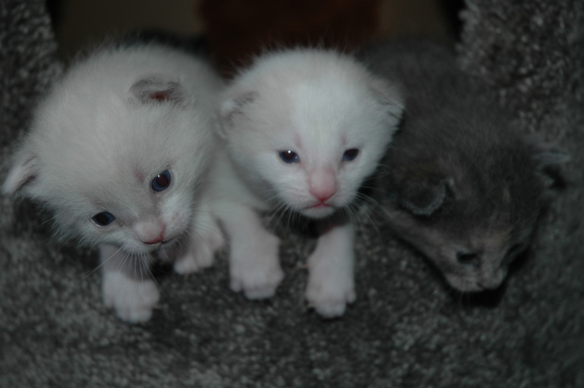 "Lola, Sadie, and Annie! Can you say ""cute""?"