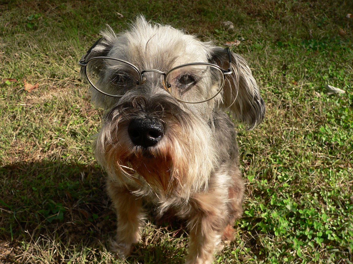 Canine eye exams are a must!
