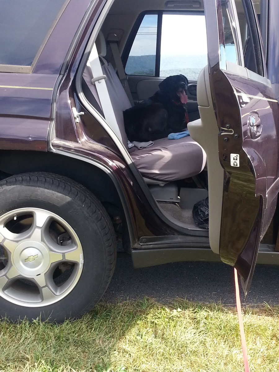 Never, ever leave your pet in a car!