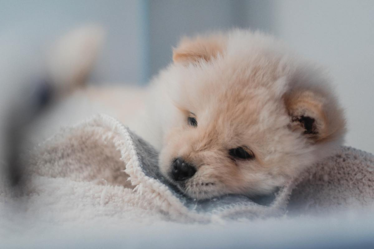 Help your puppy to feel comfortable in their new home.