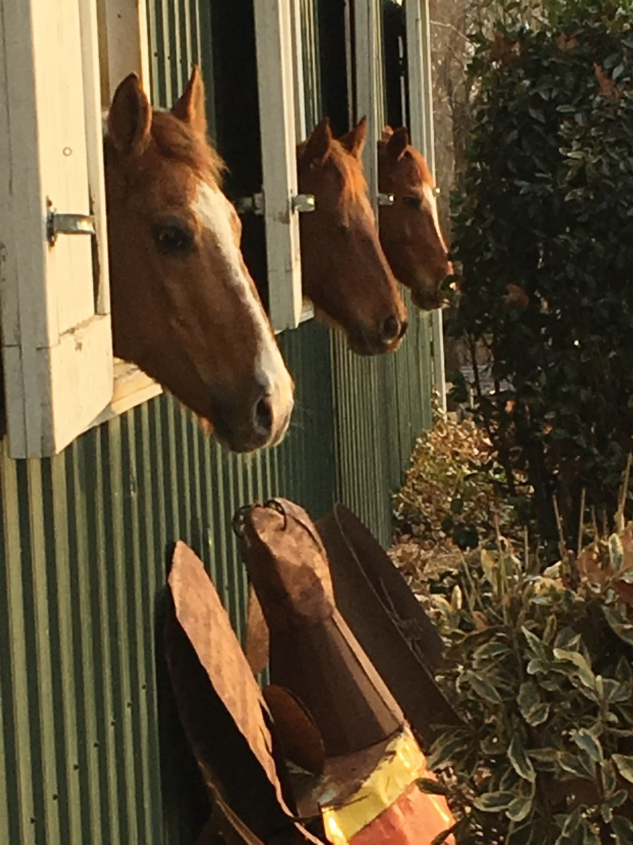 It is a matter of opinion whether you should leave your horses in or out during a bad storm. There is no wrong answer, it is whatever you are most comfortable with.