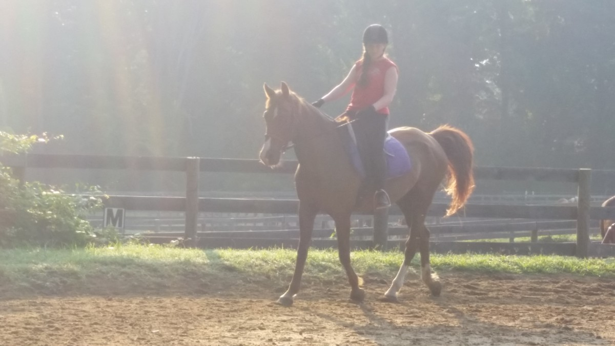 Both posting trot and sitting trot are essential riding skills. This rider is not a beginner; you can see she is using the position she learned as a beginner to sit the trot without posting.