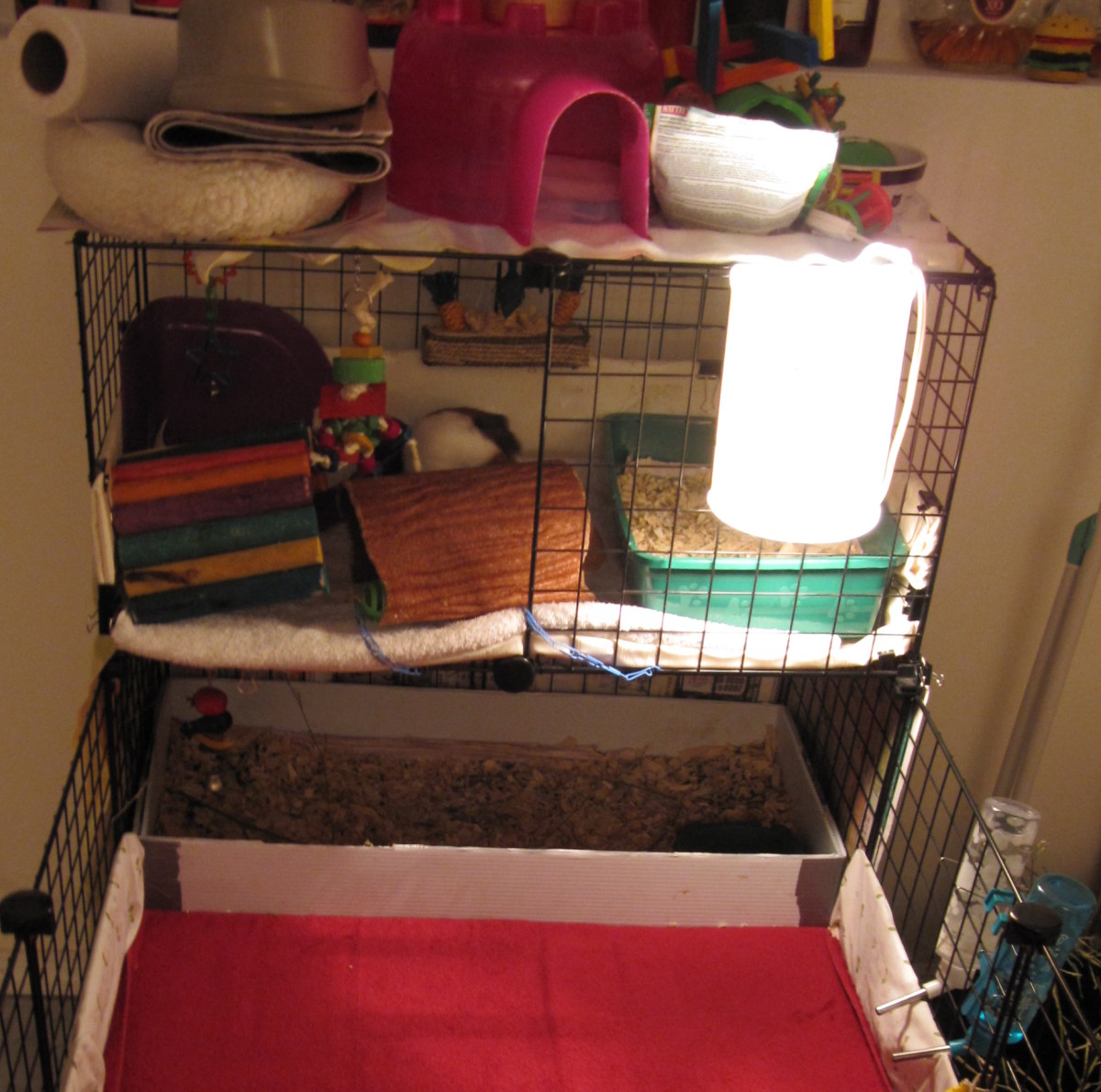 All their toys are either on the upper level with them or on the top of the cage.
