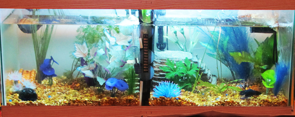 How to make a cheap home made betta tank divider pethelpful for Fish tank divider 5 gallon