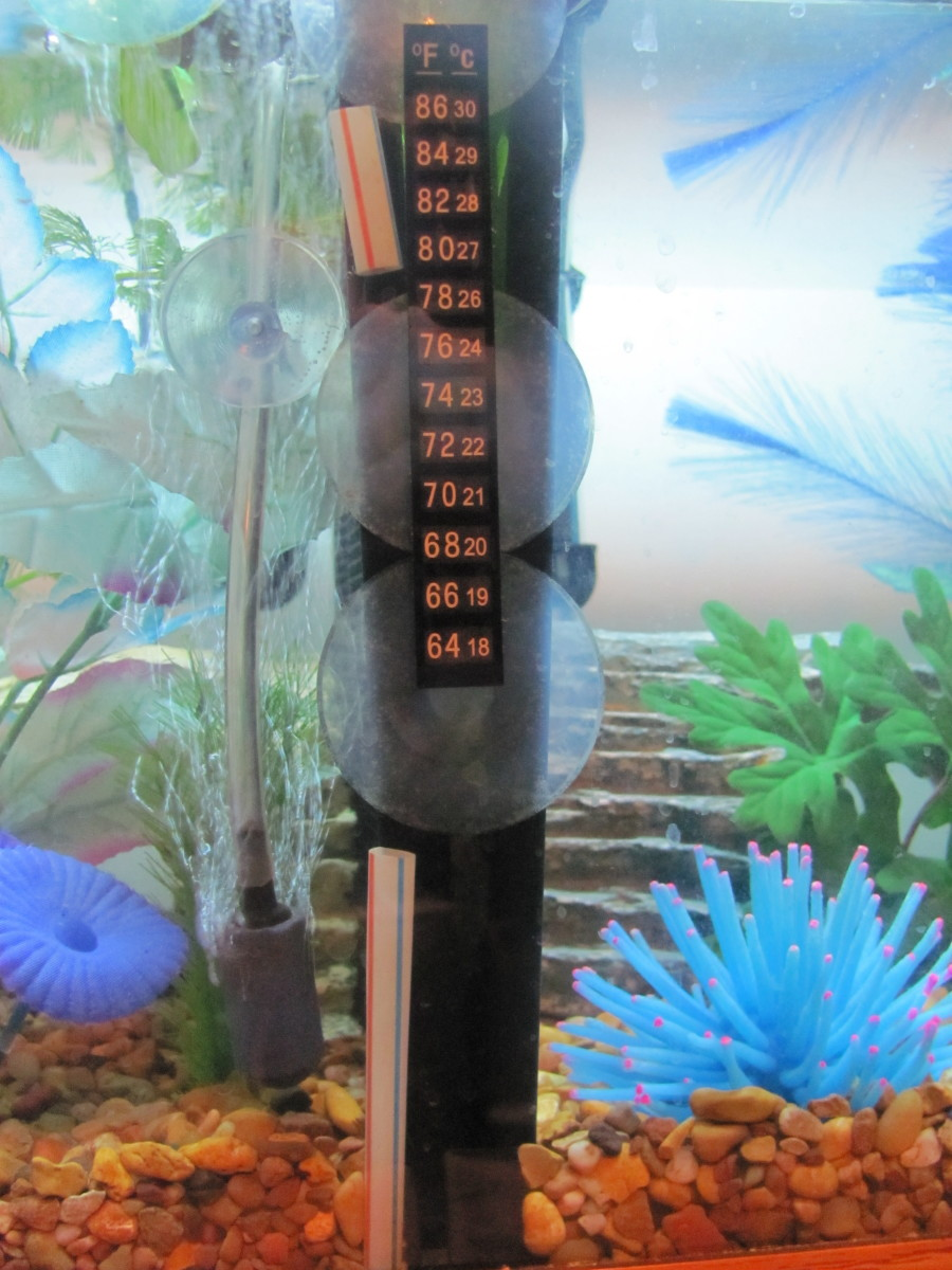 How to make a cheap home made betta tank divider pethelpful for How much is a fish tank