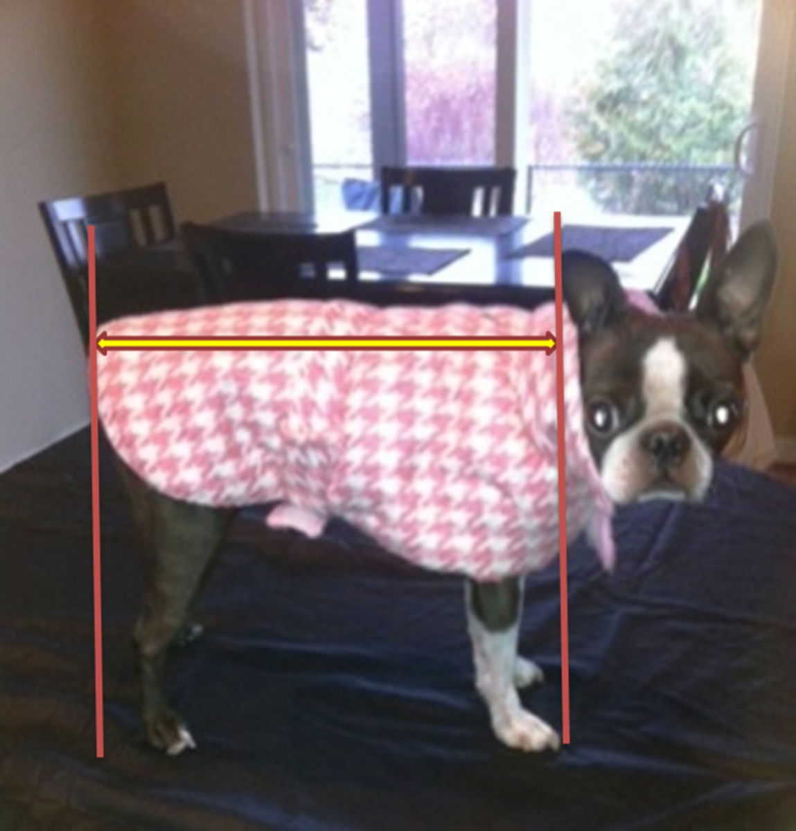 Measure your dog from an inch forward of  the point of shoulder to about an inch past the doc of the tail.