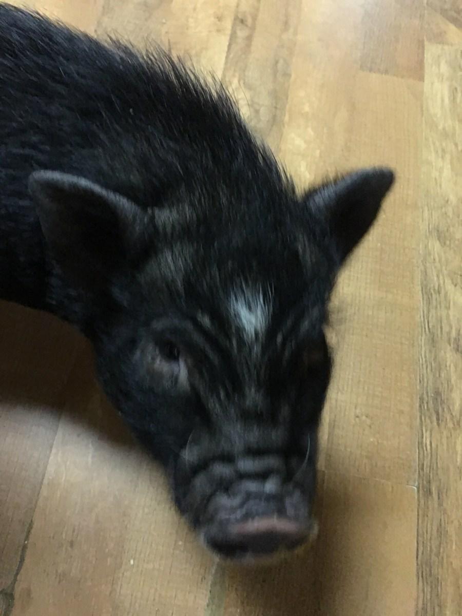 Hamlet, begging for food!