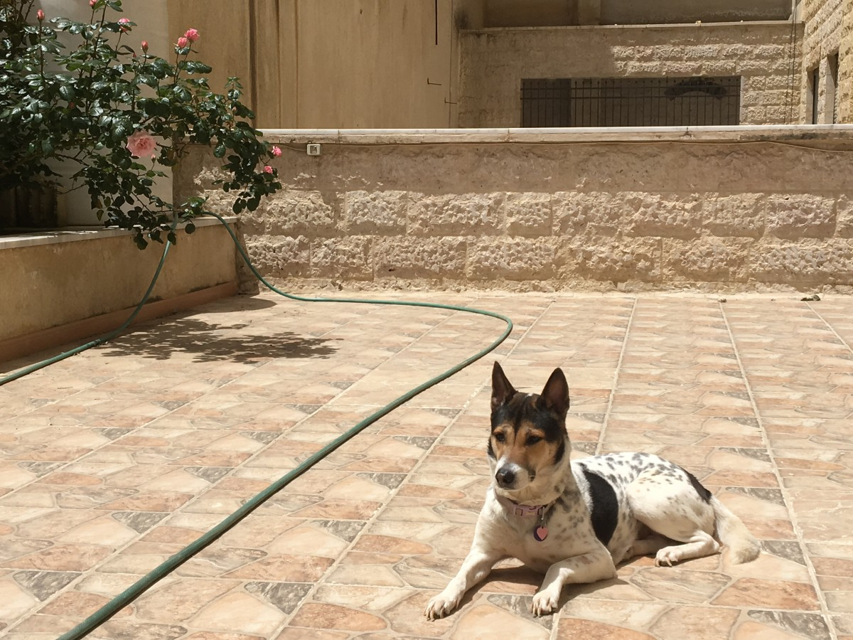 Flying With a Dog From the UK to Jordan