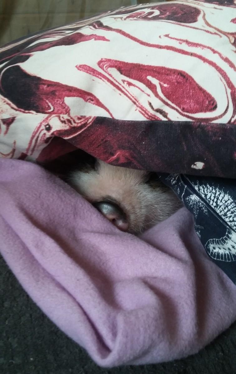 Snuggled in bed