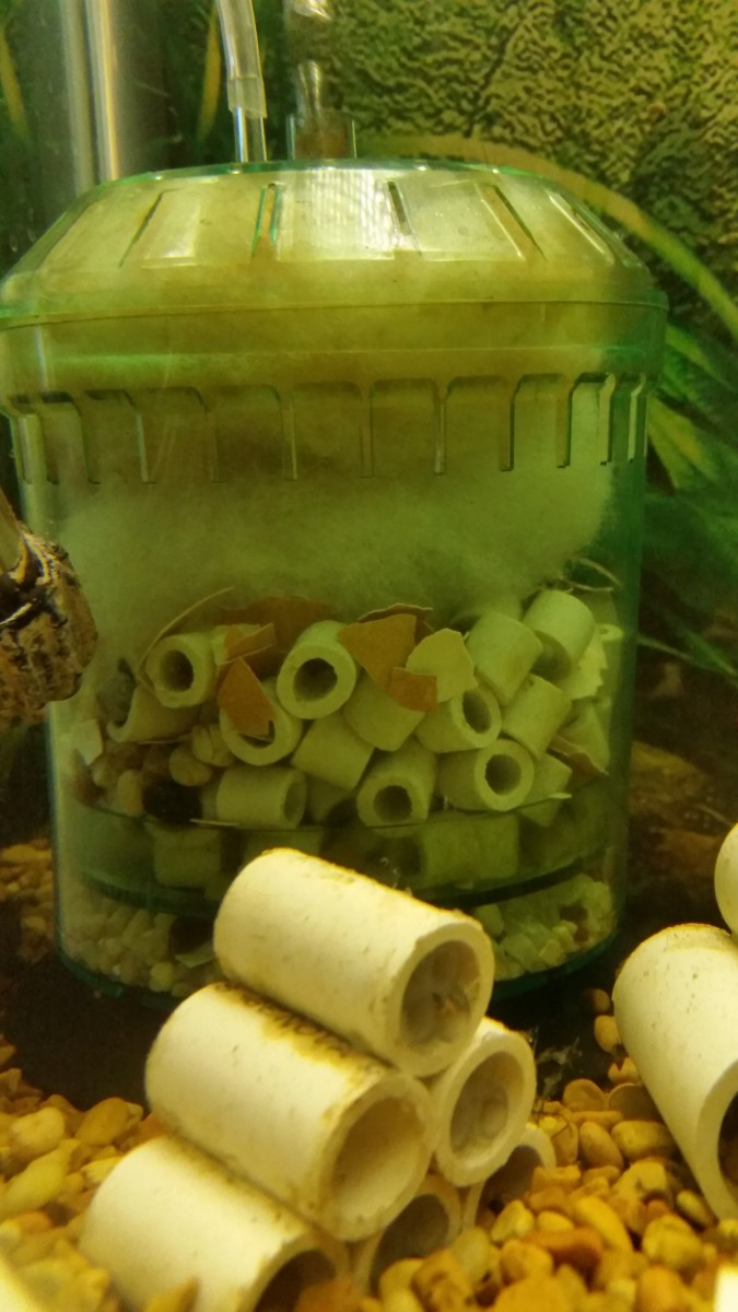 Filter that uses all three filtration: Filter floss, pieces of eggshell, and ceramic rings and gravel.