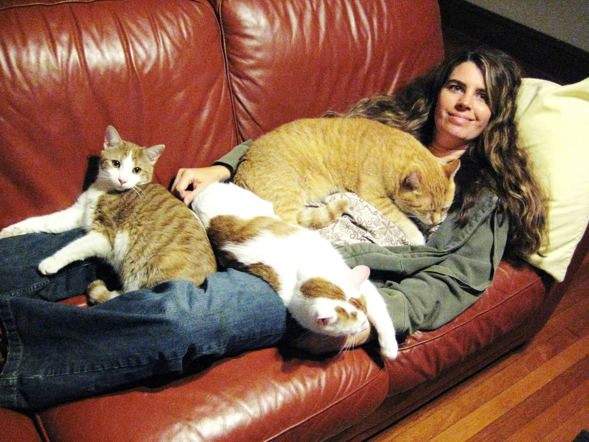 Who needs a blanket when you have friends?  Lots and lots of furry friends.