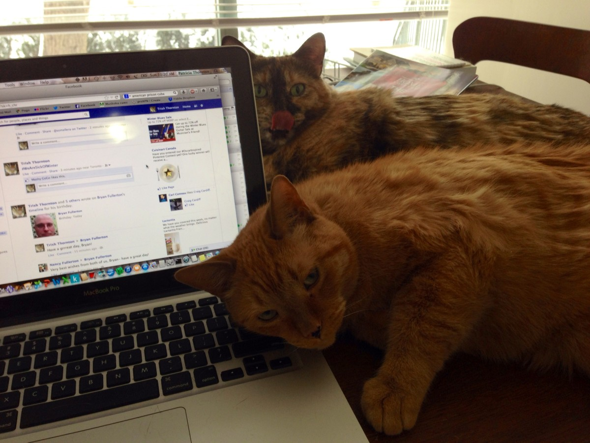 The feline computer crew reports for duty.
